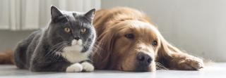 Dog & Cat just Chillin'